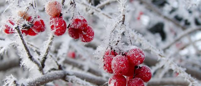 winter garten