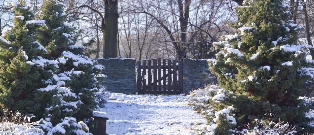winterlicher garten mit schnee