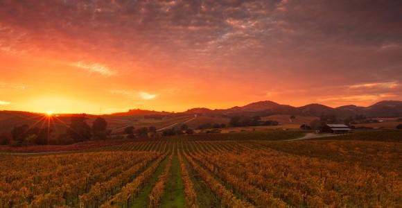 Der Weingarten im Herbst
