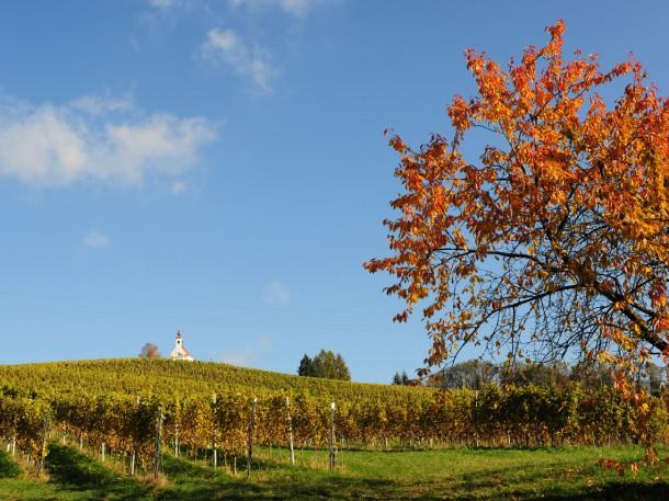 Weingarten Polz - Theresienhöhe