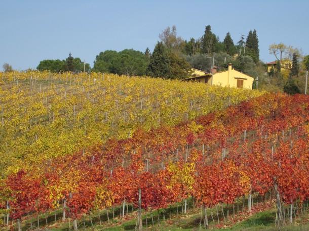 Der Weingarten im Herbst, Chianti, Italien