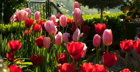 Südsteiermark Garten, Renate Polz