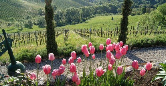 Tulpen im Südsteiermark Garten, Renate Polz