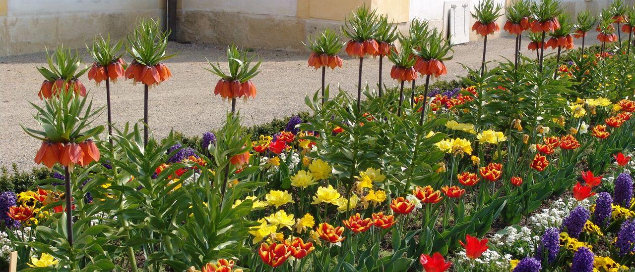 Frühling auf Schloss Hof Meierhof Broderie (c) Schloss Hof