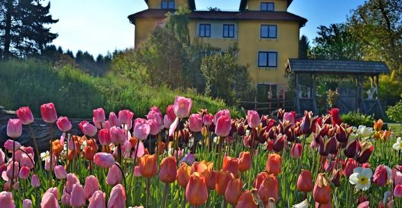 Frühling im Molzbachhof, (c) Molzbachhof