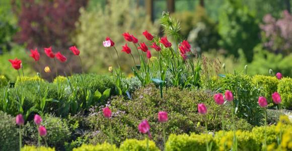 Frühling im Paradiesgart´l, (c) Molzbachhof