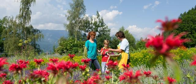 Zeit im Kräutergarten verbringen