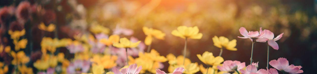 Sonnenaufgang im Garten, Line-tOodLinGfc by pixabay.com