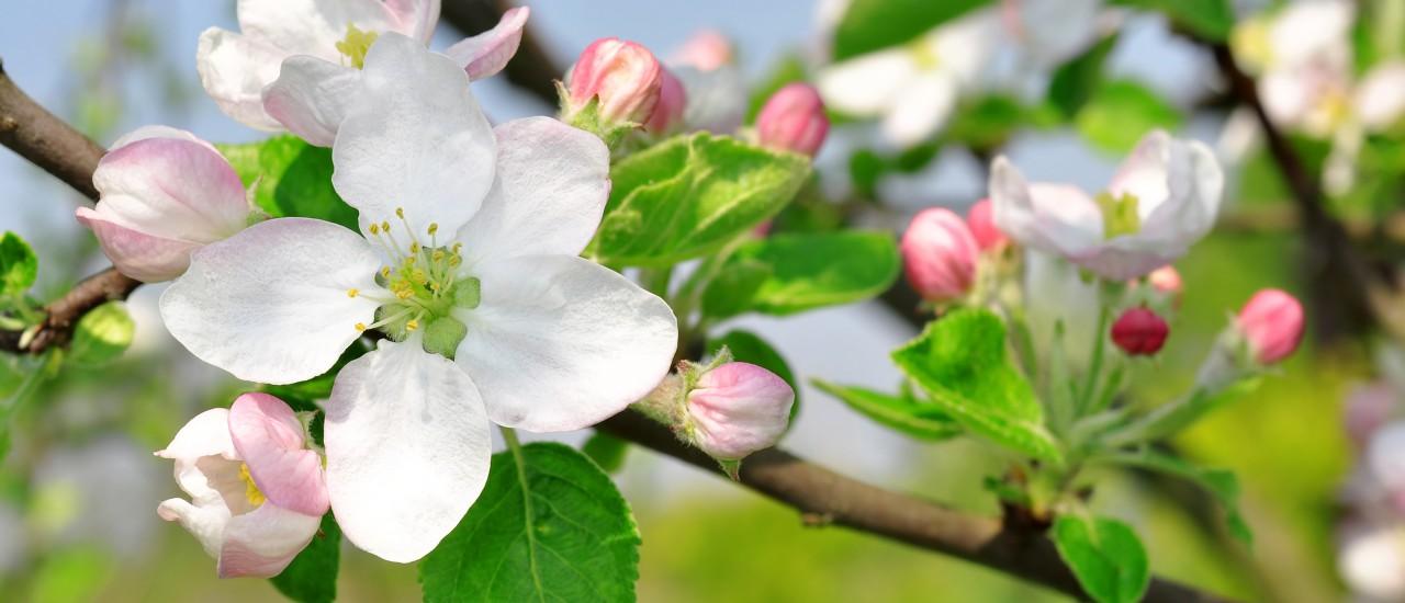 Blühender Frühling