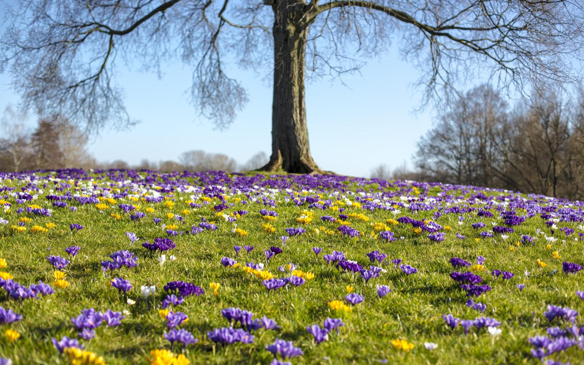 Der Garten Im März