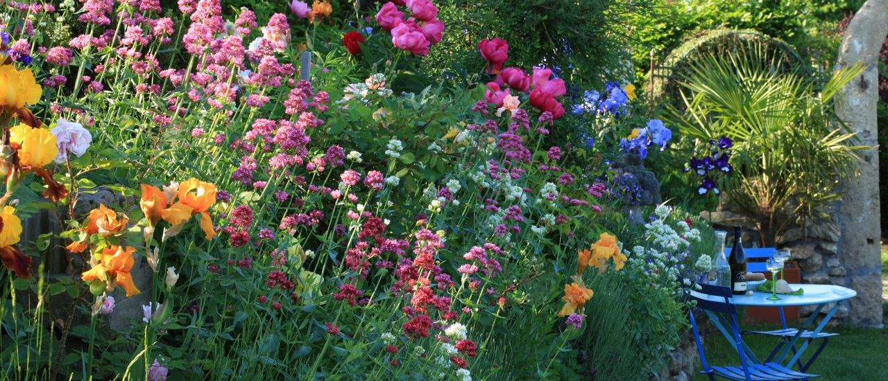 Iris im Südsteiermark Garten, (c) Renate Polz