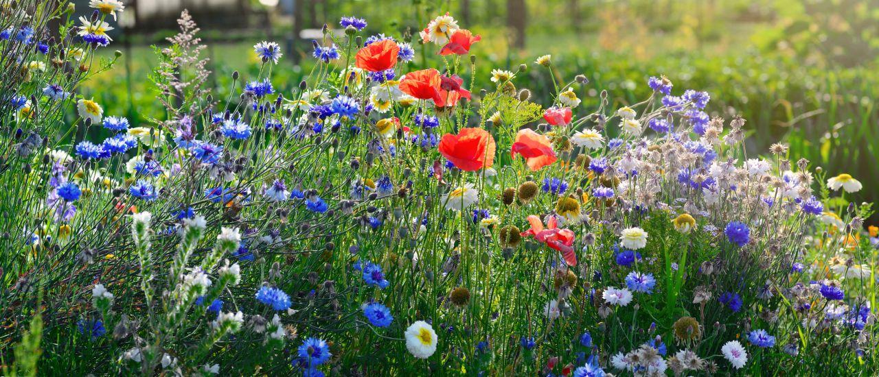 Sommereinzug im Garten