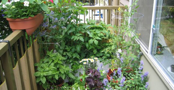 Balkonpflanzen, by Megan, flickr.com