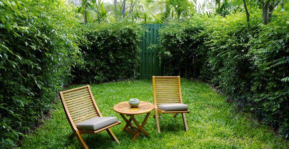 Hecken - der ideale Sichtschutz für den Garten