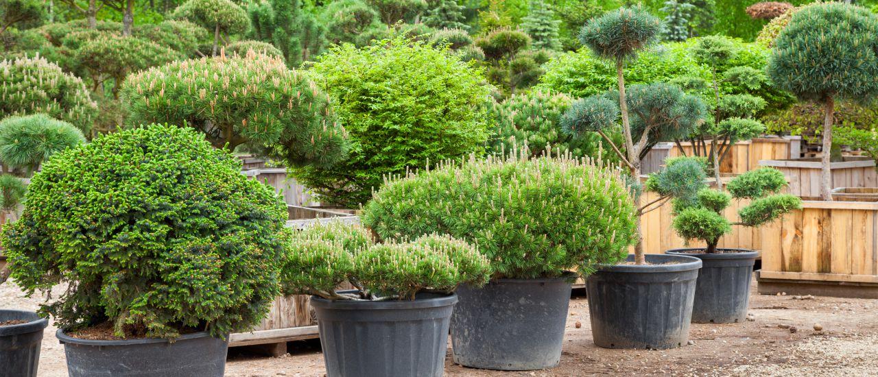Einkauf der Pflanzen für den japanischen Garten