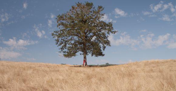 Baum, Photo by Sean Brown on Unsplash