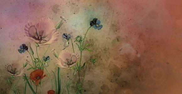 Alte Zeichnung Blumen, cocoparisienne, pixabay